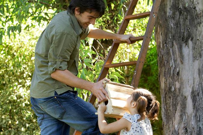 building birdhouse