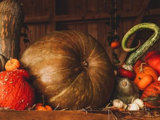 Thanksgiving pumpkins and gourds