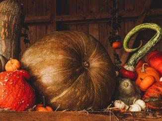 Thanksgiving pumpkins and gourds