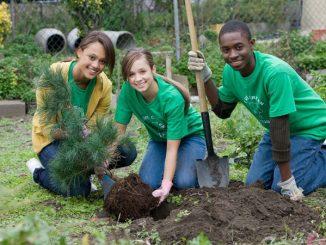 teens planting a tree